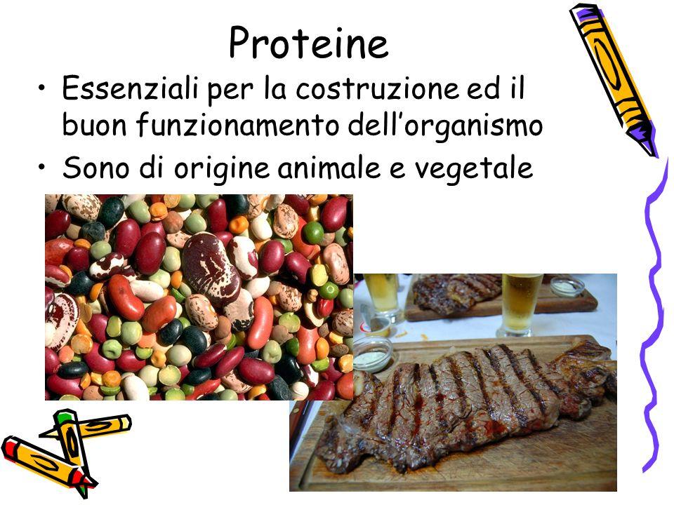 Proteine Essenziali per la costruzione ed il buon funzionamento dellorganismo Sono di origine animale e vegetale