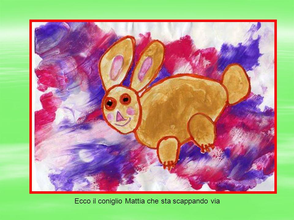 Ecco il coniglio Mattia che sta scappando via