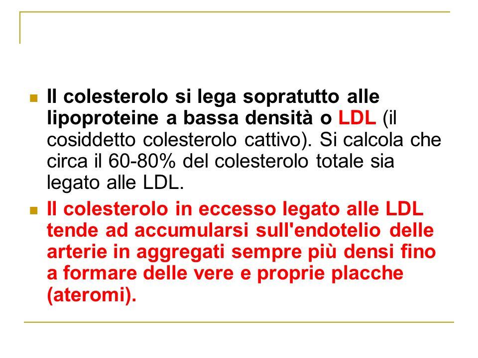 Il colesterolo si lega sopratutto alle lipoproteine a bassa densità o LDL (il cosiddetto colesterolo cattivo).