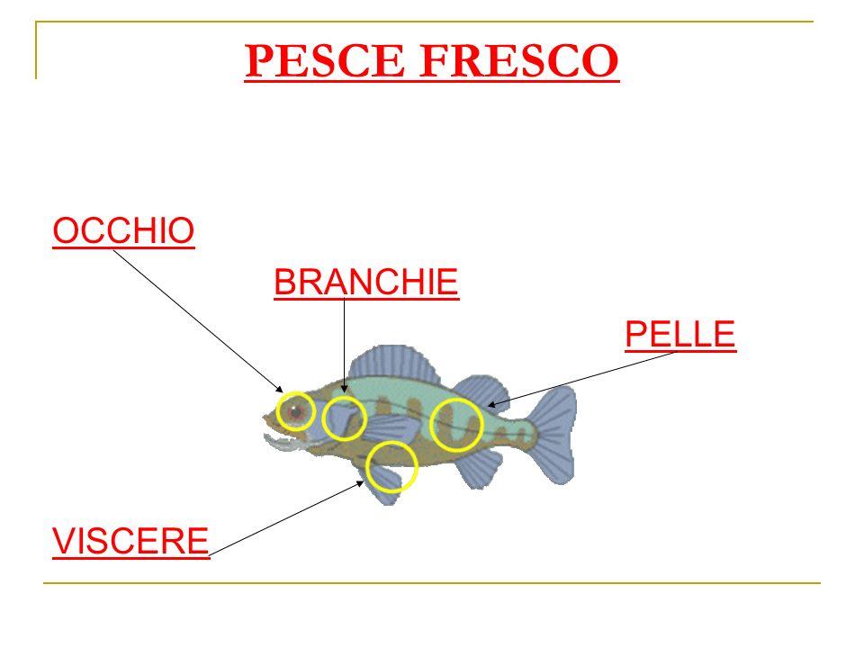 PESCE FRESCO OCCHIO BRANCHIE PELLE VISCERE