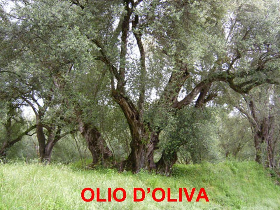 OLIO DOLIVA