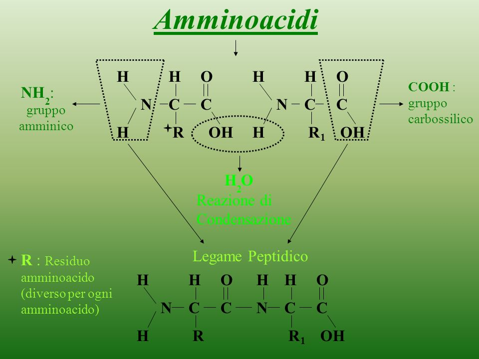 Proteine Composizione -Carbonio C -Idrogeno H -Ossigeno O -Azoto N -Fosforo P -Zolfo S Formate da: Amminoacidi aa Sono circa 20 11 9essenziali Funzion