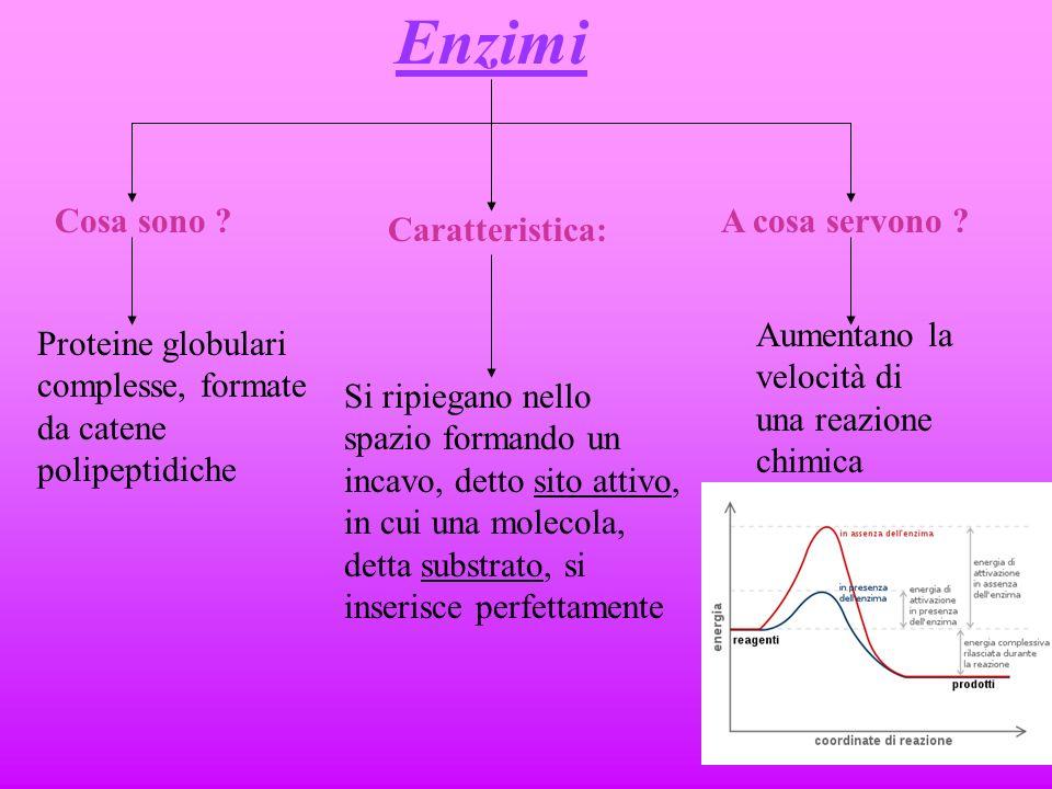 Livelli di organizzazione Struttura secondaria Forma lineare Forma ad elica o a foglio ripiegato Struttura terziaria Forma globulare Struttura quatern