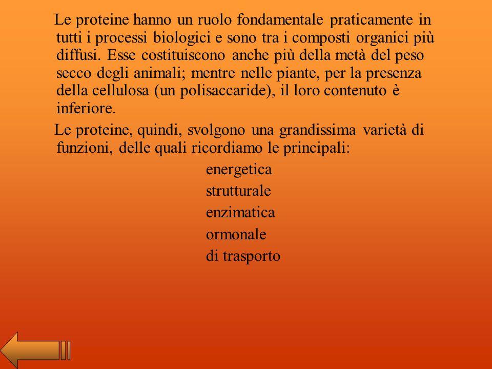 Le proteine sono una delle quattro classi di biomolecole e sono polimeri indispensabili per la vita. Sono costituite da sei elementi: Carbonio C Idrog
