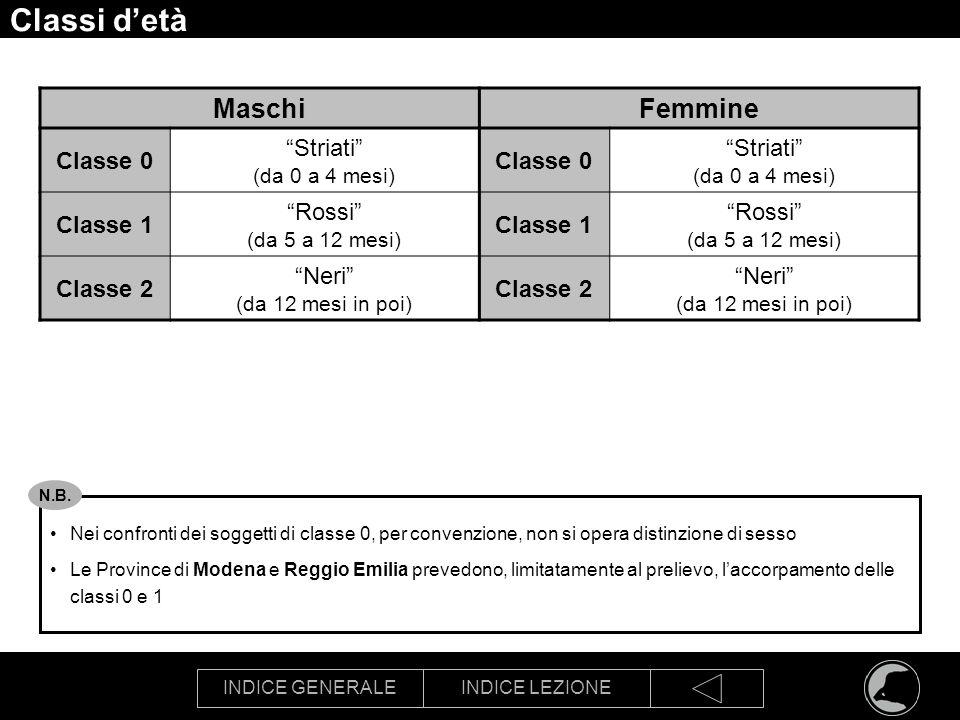 INDICE GENERALEINDICE LEZIONE Classi detà MaschiFemmine Classe 0 Striati (da 0 a 4 mesi) Classe 0 Striati (da 0 a 4 mesi) Classe 1 Rossi (da 5 a 12 me
