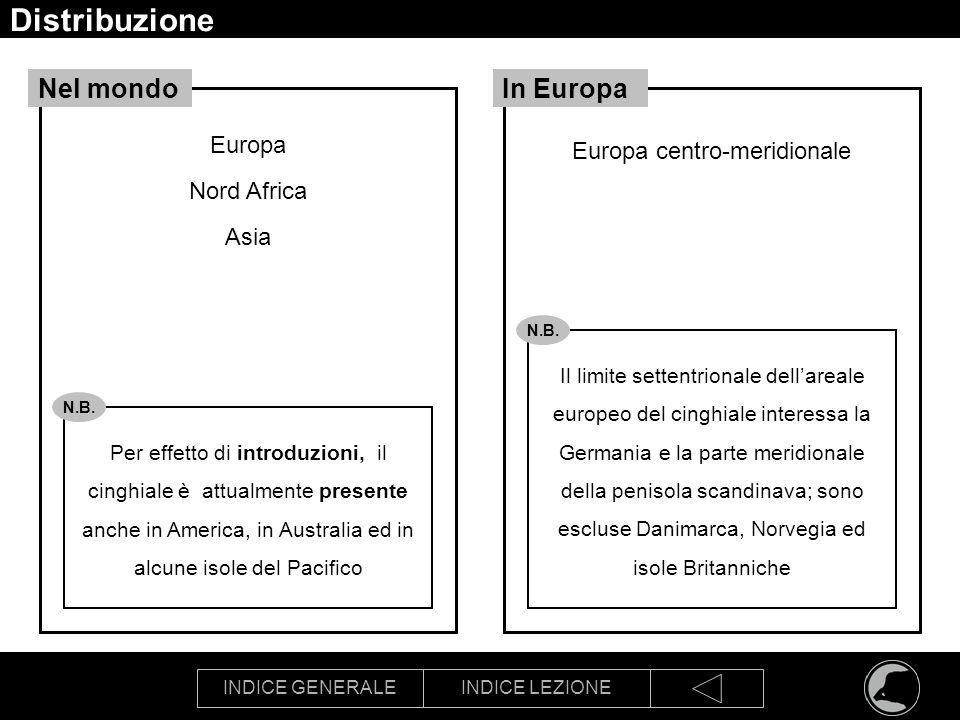 INDICE GENERALEINDICE LEZIONE Distribuzione Europa Nord Africa Asia Nel mondo Europa centro-meridionale In Europa Per effetto di introduzioni, il cing