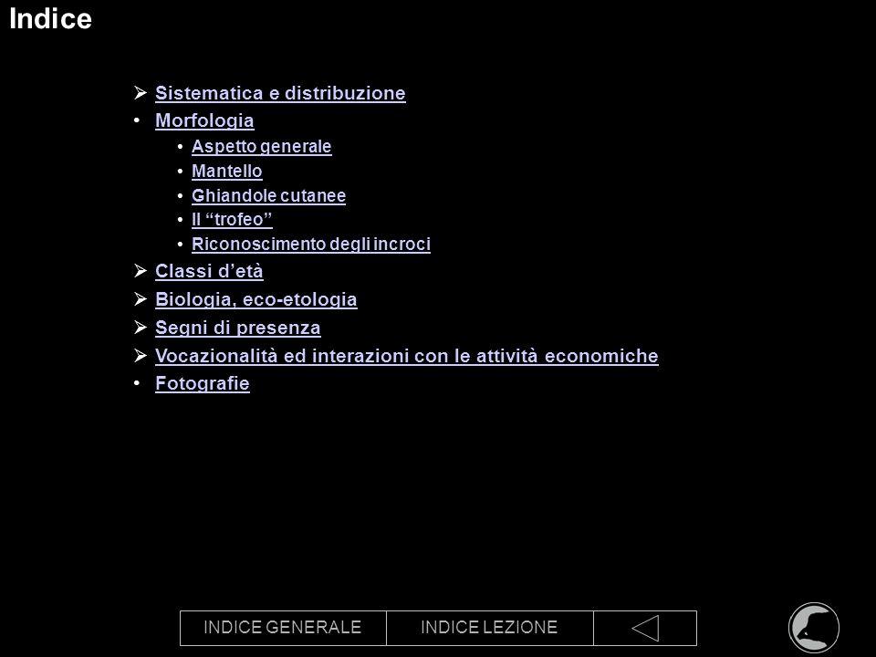 INDICE GENERALEINDICE LEZIONE Indice Sistematica e distribuzione Morfologia Aspetto generale Mantello Ghiandole cutanee Il trofeo Riconoscimento degli
