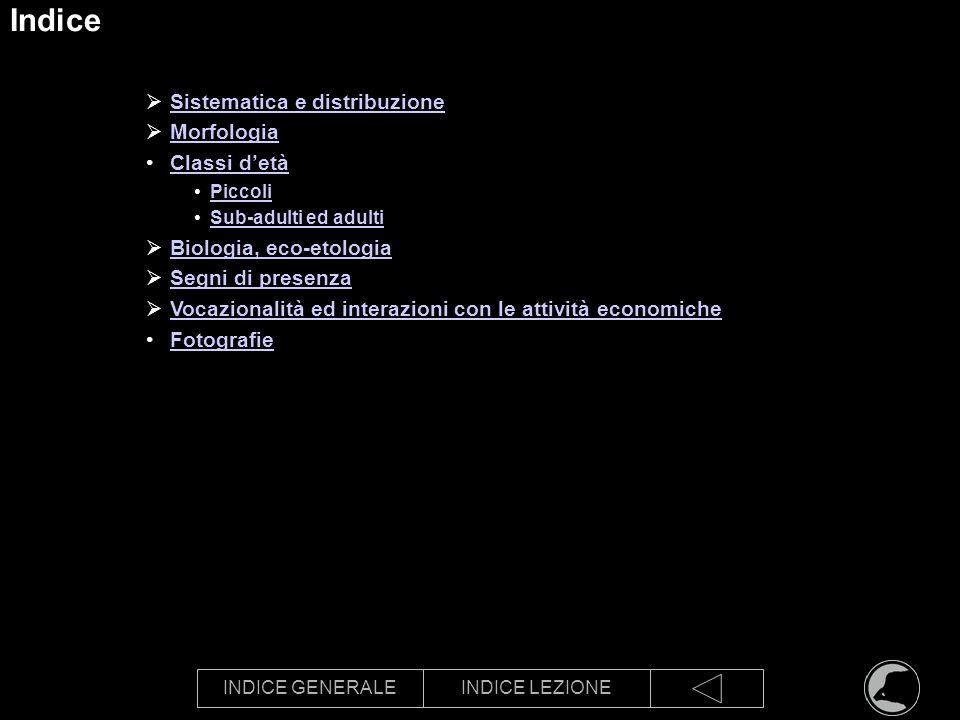 INDICE GENERALEINDICE LEZIONE Indice Sistematica e distribuzione Morfologia Classi detà Piccoli Sub-adulti ed adulti Biologia, eco-etologia Segni di p