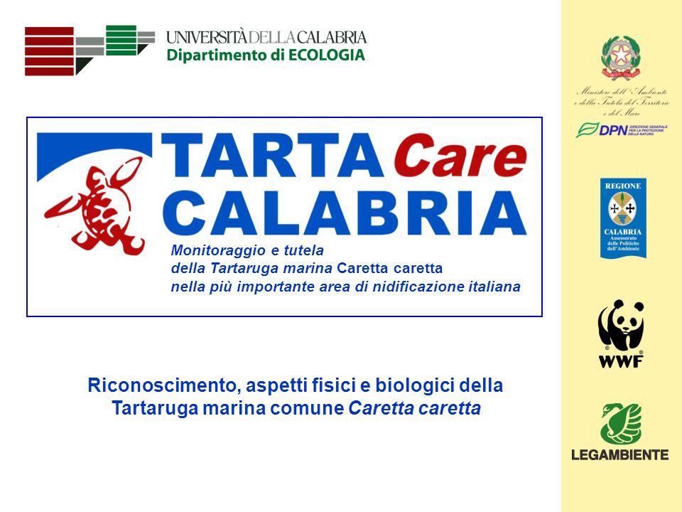 1 Monitoraggio e tutela della Tartaruga marina Caretta caretta nella più importante area di nidificazione italiana Riconoscimento, aspetti fisici e bi