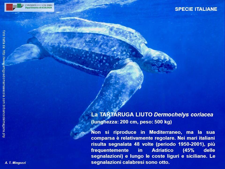 Non si riproduce in Mediterraneo, ma la sua comparsa è relativamente regolare. Nei mari italiani risulta segnalata 48 volte (periodo 1950-2001), più f