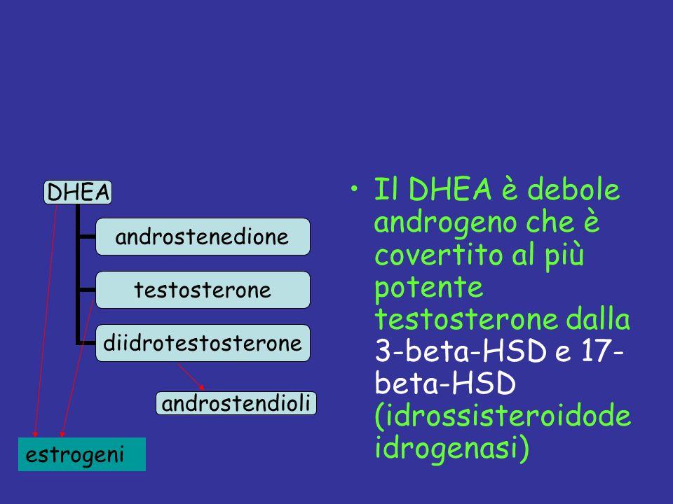 Il DHEA è debole androgeno che è covertito al più potente testosterone dalla 3-beta-HSD e 17- beta-HSD (idrossisteroidode idrogenasi) androstendioli e