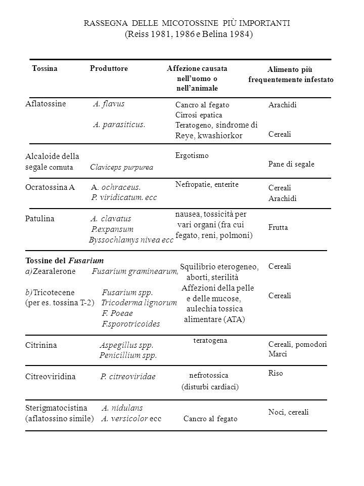 RASSEGNA DELLE MICOTOSSINE PIÙ IMPORTANTI (Reiss 1981, 1986 e Belina 1984) Tossina ProduttoreAffezione causata nelluomo o nellanimale Alimento più fre