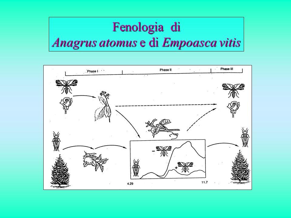 Fenologia di Anagrus atomus e di Empoasca vitis