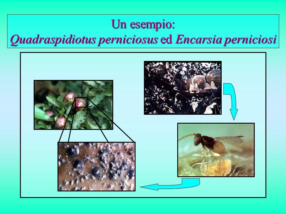 Un esempio: Quadraspidiotus perniciosus ed Encarsia perniciosi