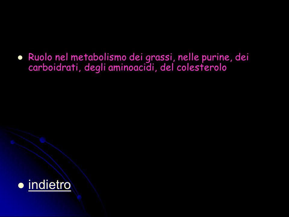 Ruolo nel metabolismo dei grassi, nelle purine, dei carboidrati, degli aminoacidi, del colesterolo indietro indietro indietro