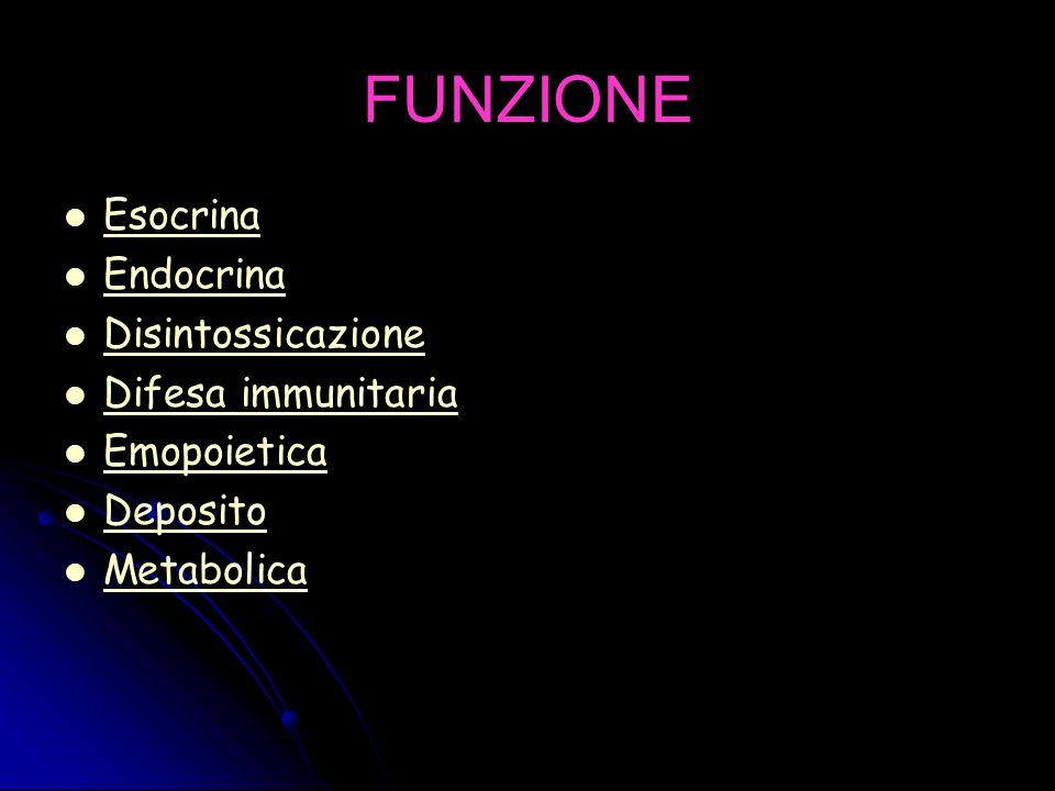 FUNZIONE Esocrina Endocrina Disintossicazione Difesa immunitaria Emopoietica Deposito Metabolica