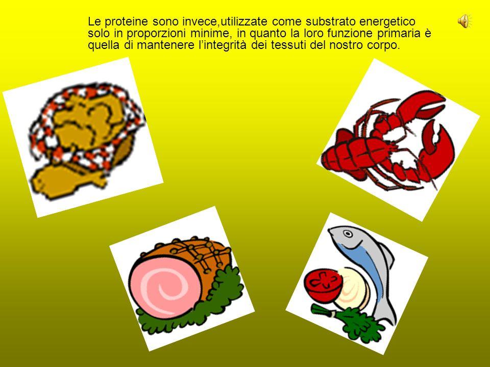Le proteine sono invece,utilizzate come substrato energetico solo in proporzioni minime, in quanto la loro funzione primaria è quella di mantenere lintegrità dei tessuti del nostro corpo.