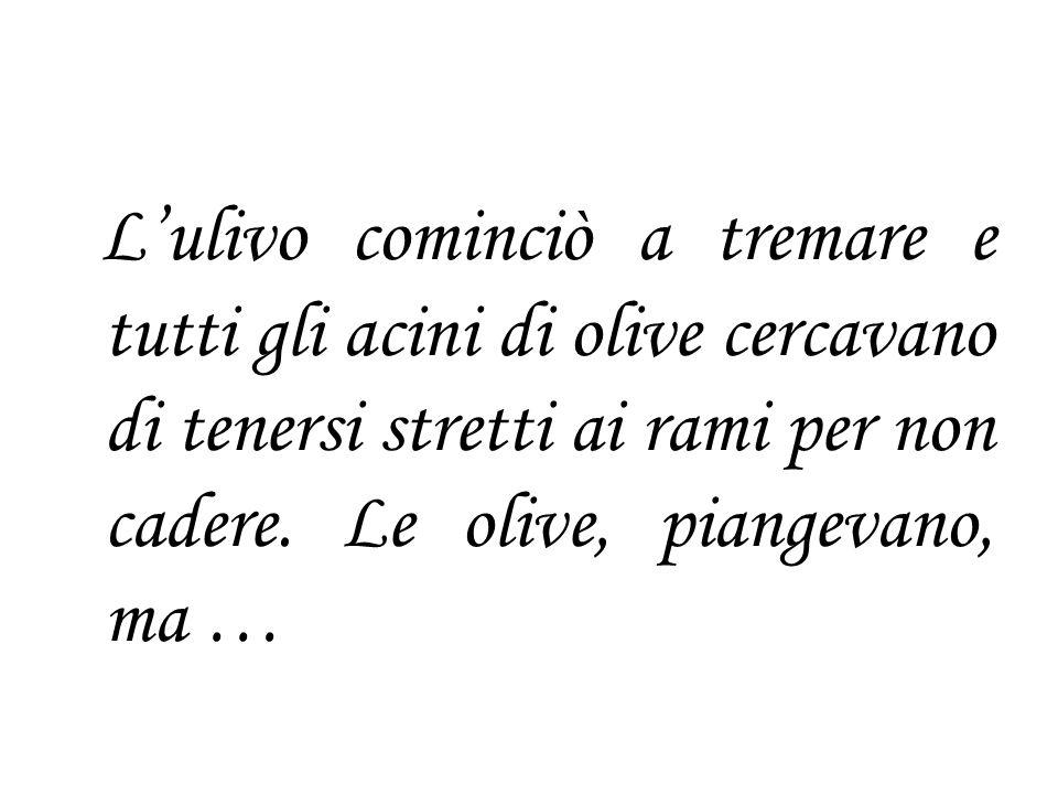 Lulivo cominciò a tremare e tutti gli acini di olive cercavano di tenersi stretti ai rami per non cadere. Le olive, piangevano, ma …