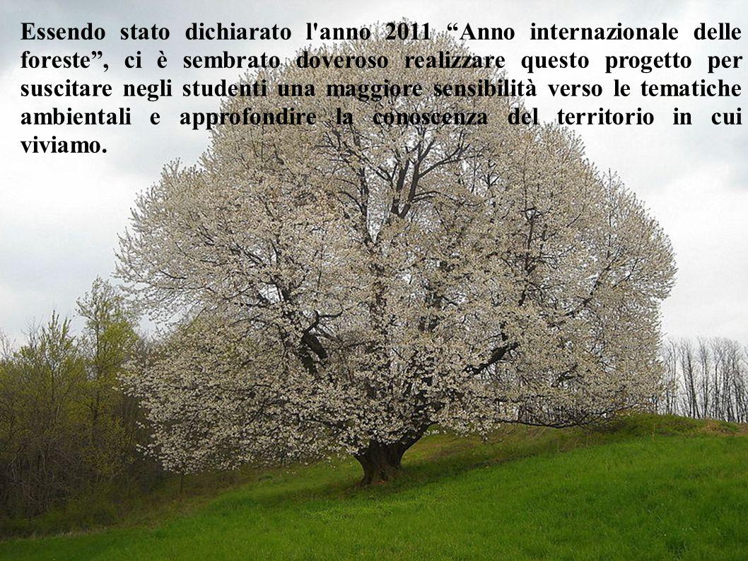 Essendo stato dichiarato l'anno 2011 Anno internazionale delle foreste, ci è sembrato doveroso realizzare questo progetto per suscitare negli studenti