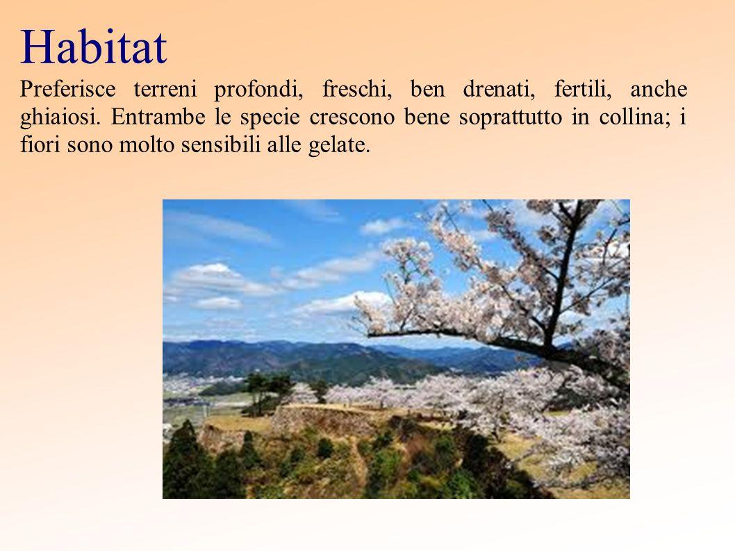Habitat Preferisce terreni profondi, freschi, ben drenati, fertili, anche ghiaiosi. Entrambe le specie crescono bene soprattutto in collina; i fiori s