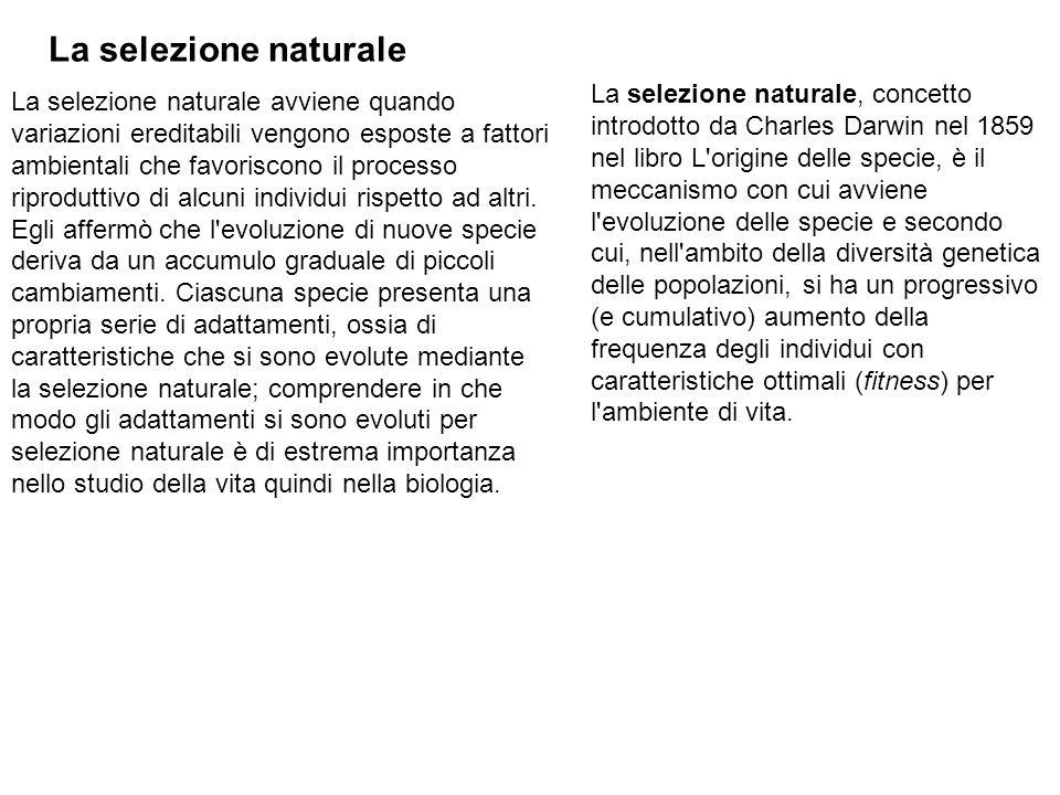 La selezione naturale La selezione naturale avviene quando variazioni ereditabili vengono esposte a fattori ambientali che favoriscono il processo riproduttivo di alcuni individui rispetto ad altri.