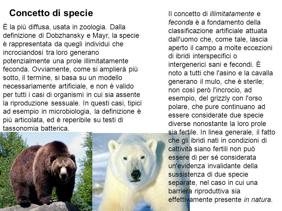È la più diffusa, usata in zoologia. Dalla definizione di Dobzhansky e Mayr, la specie è rappresentata da quegli individui che incrociandosi tra loro