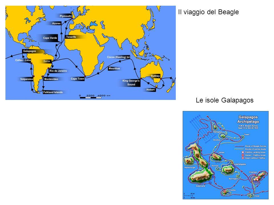 Il viaggio del Beagle Le isole Galapagos