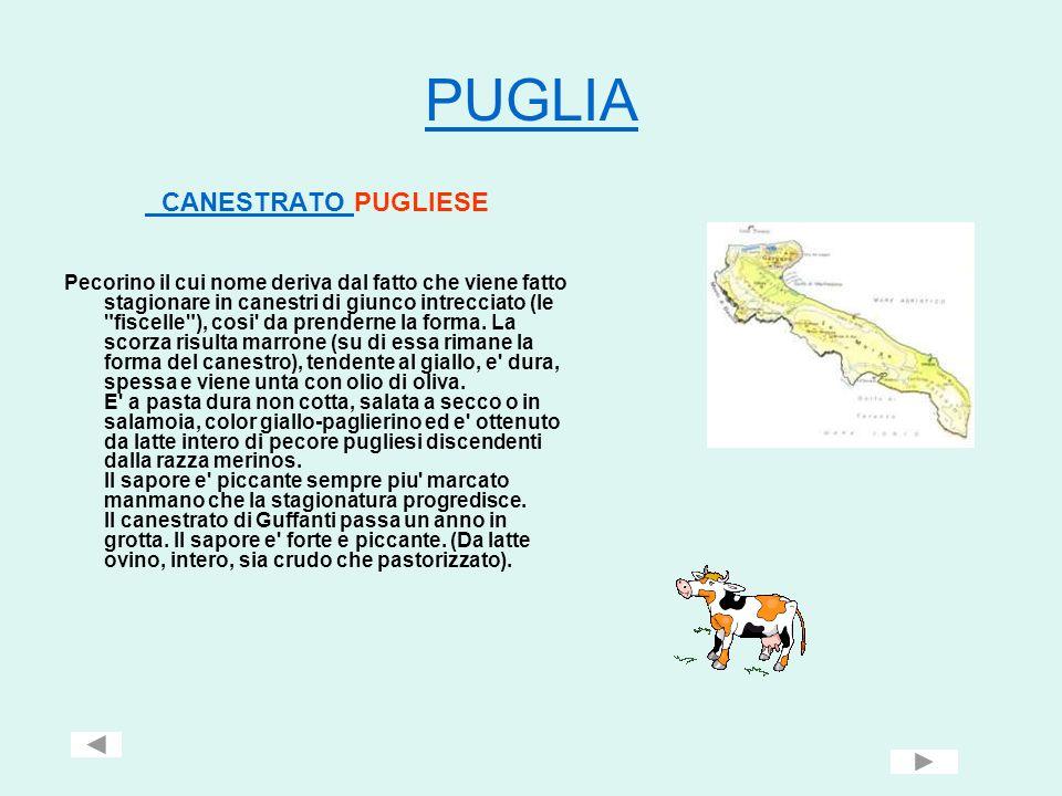 PUGLIA CANESTRATO CANESTRATO PUGLIESE Pecorino il cui nome deriva dal fatto che viene fatto stagionare in canestri di giunco intrecciato (le