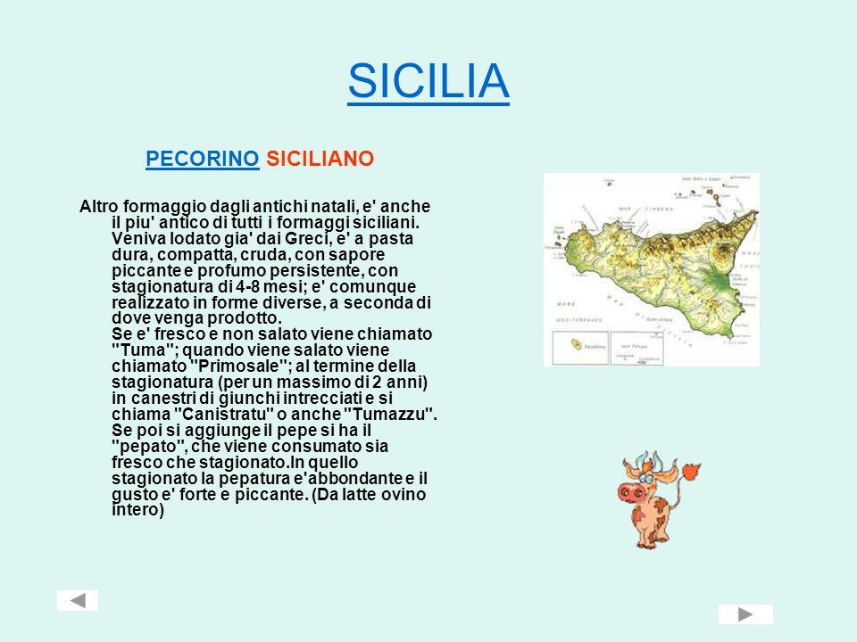 SICILIA PECORINOPECORINO SICILIANO Altro formaggio dagli antichi natali, e' anche il piu' antico di tutti i formaggi siciliani. Veniva lodato gia' dai