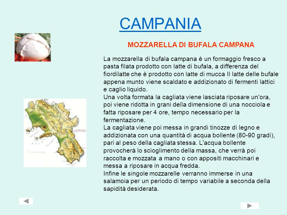 CAMPANIA MOZZARELLA DI BUFALA CAMPANA La mozzarella di bufala campana è un formaggio fresco a pasta filata prodotto con latte di bufala, a differenza