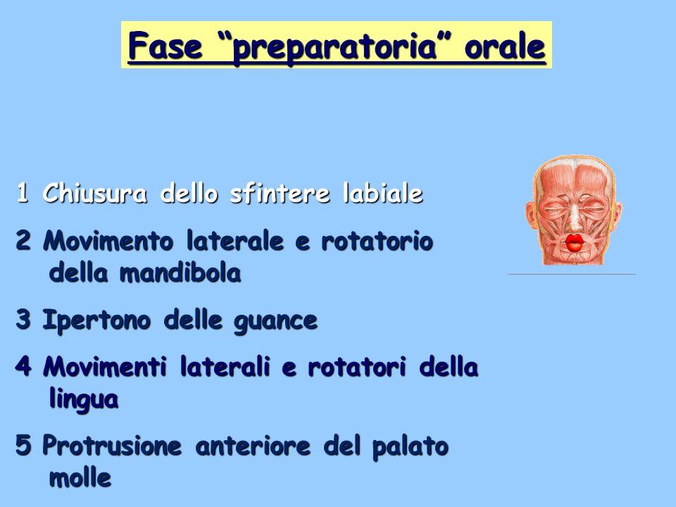 1 Chiusura dello sfintere labiale 2 Movimento laterale e rotatorio della mandibola 3 Ipertono delle guance 4 Movimenti laterali e rotatori della lingu