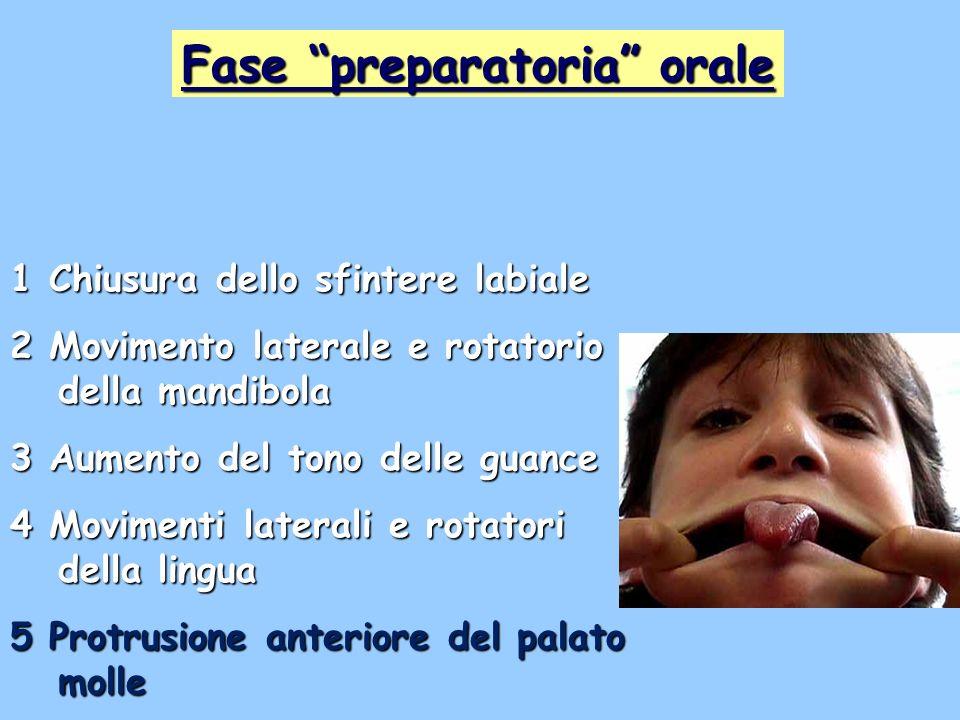 1 Chiusura dello sfintere labiale 2 Movimento laterale e rotatorio della mandibola 3 Aumento del tono delle guance 4 Movimenti laterali e rotatori del
