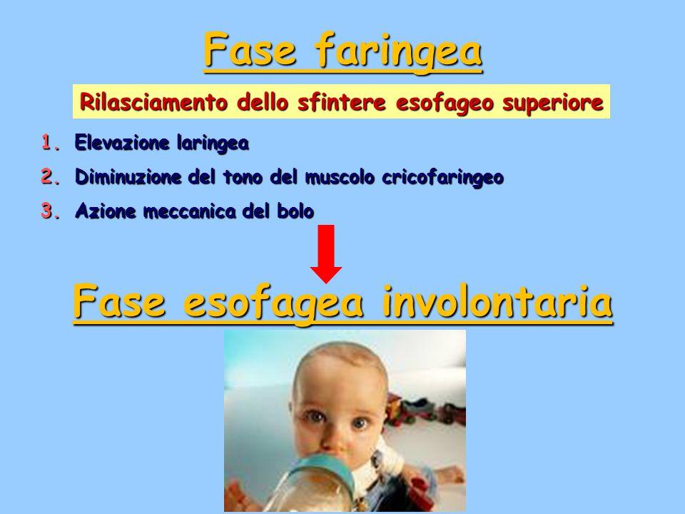 Rilasciamento dello sfintere esofageo superiore 1.Elevazione laringea 2.Diminuzione del tono del muscolo cricofaringeo 3.Azione meccanica del bolo Fas