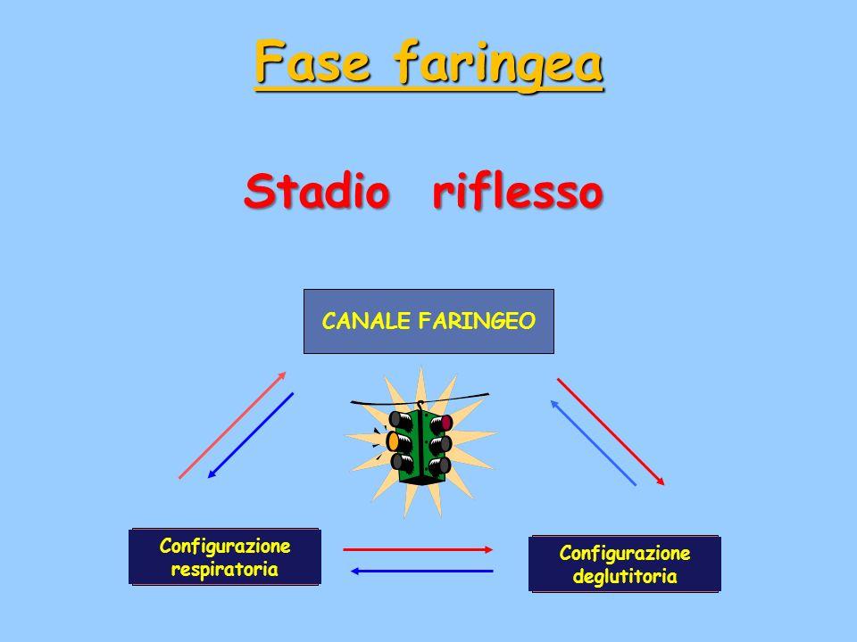 Stadio riflesso CANALE FARINGEO Configurazione respiratoria Configurazione deglutitoria Fase faringea