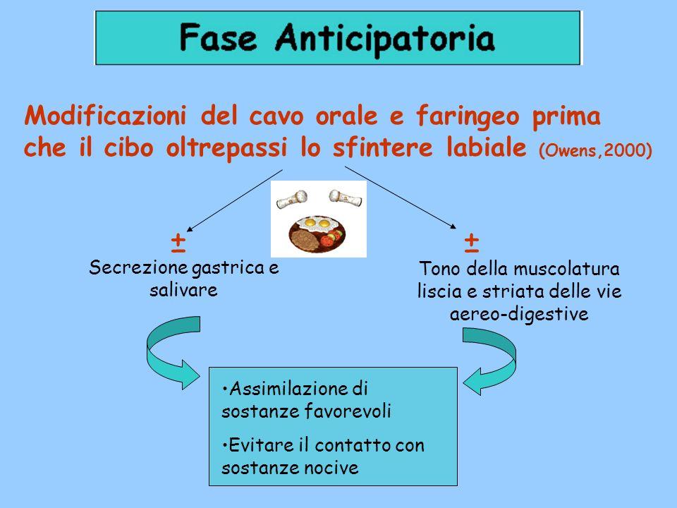 Modificazioni del cavo orale e faringeo prima che il cibo oltrepassi lo sfintere labiale (Owens,2000) Assimilazione di sostanze favorevoli Evitare il