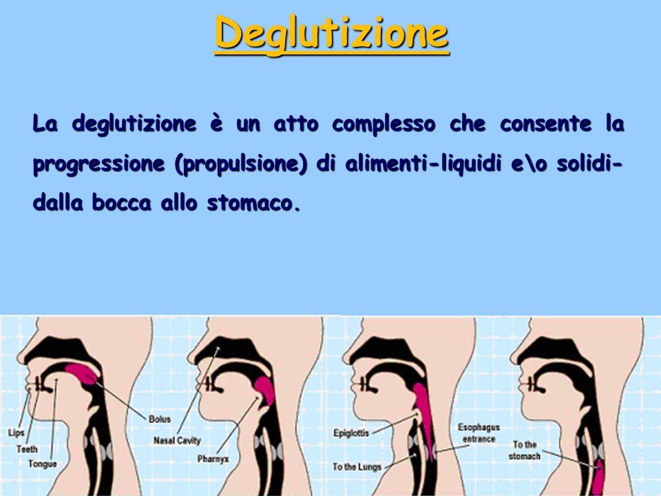 La deglutizione è un atto complesso che consente la progressione (propulsione) di alimenti-liquidi e\o solidi- dalla bocca allo stomaco. Deglutizione