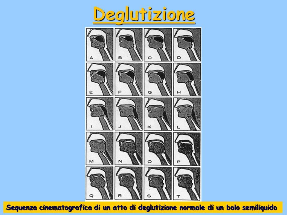 Sequenza cinematografica di un atto di deglutizione normale di un bolo semiliquido Deglutizione