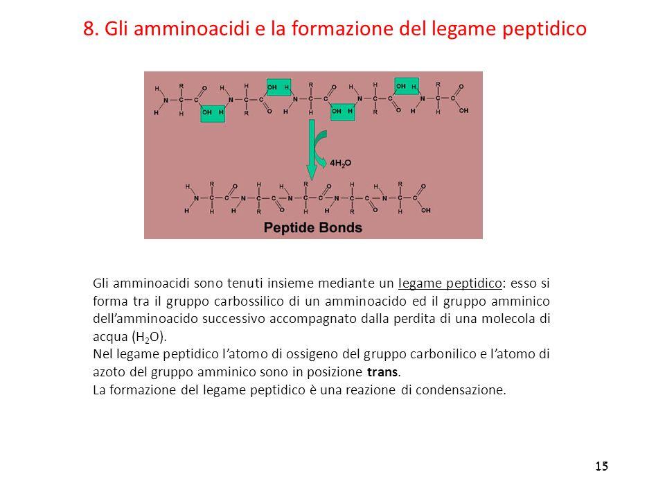 15 8. Gli amminoacidi e la formazione del legame peptidico Gli amminoacidi sono tenuti insieme mediante un legame peptidico: esso si forma tra il grup