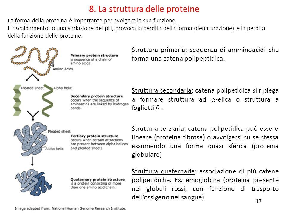 17 8. La struttura delle proteine Struttura primaria: sequenza di amminoacidi che forma una catena polipeptidica. Struttura secondaria: catena polipet