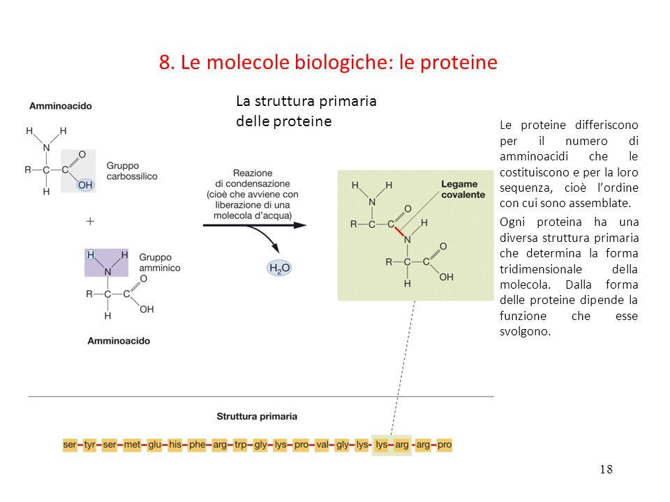 18 8. Le molecole biologiche: le proteine La struttura primaria delle proteine Le proteine differiscono per il numero di amminoacidi che le costituisc