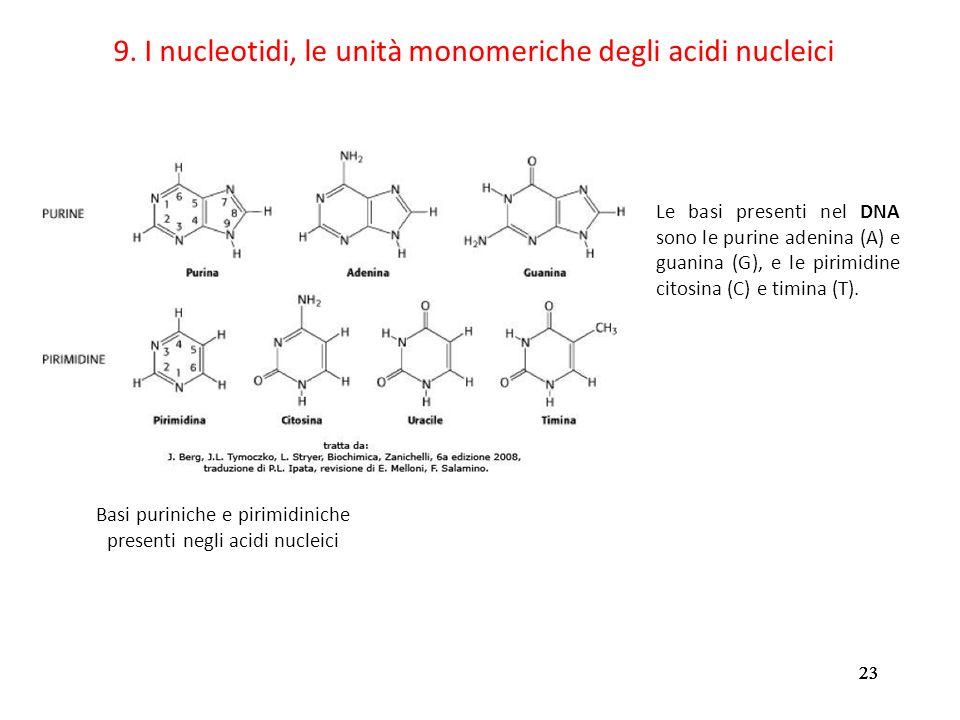 23 9. I nucleotidi, le unità monomeriche degli acidi nucleici Le basi presenti nel DNA sono le purine adenina (A) e guanina (G), e le pirimidine citos