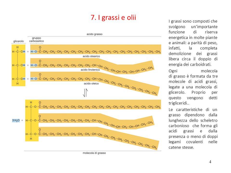 5 5 7.I trigliceridi (detti anche grassi) Ac.