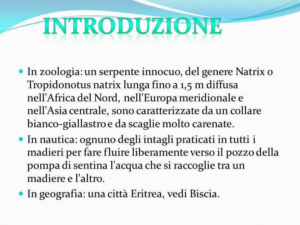 In zoologia: un serpente innocuo, del genere Natrix o Tropidonotus natrix lunga fino a 1,5 m diffusa nell'Africa del Nord, nell'Europa meridionale e n