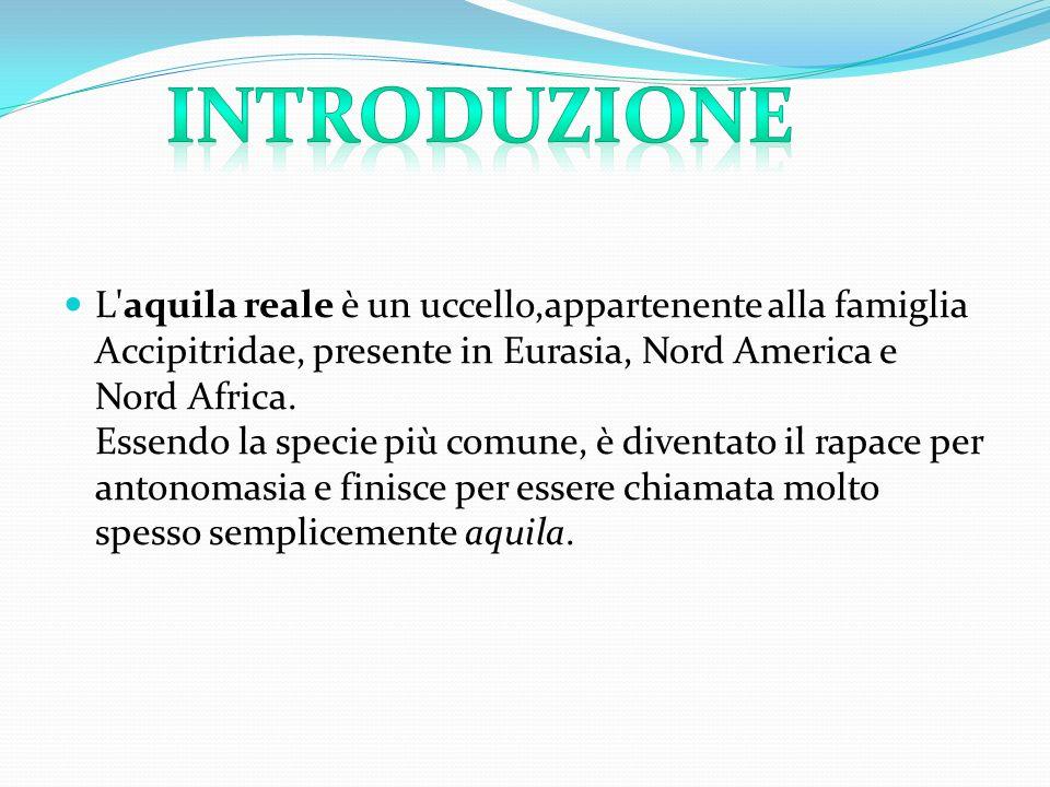 L'aquila reale è un uccello,appartenente alla famiglia Accipitridae, presente in Eurasia, Nord America e Nord Africa. Essendo la specie più comune, è