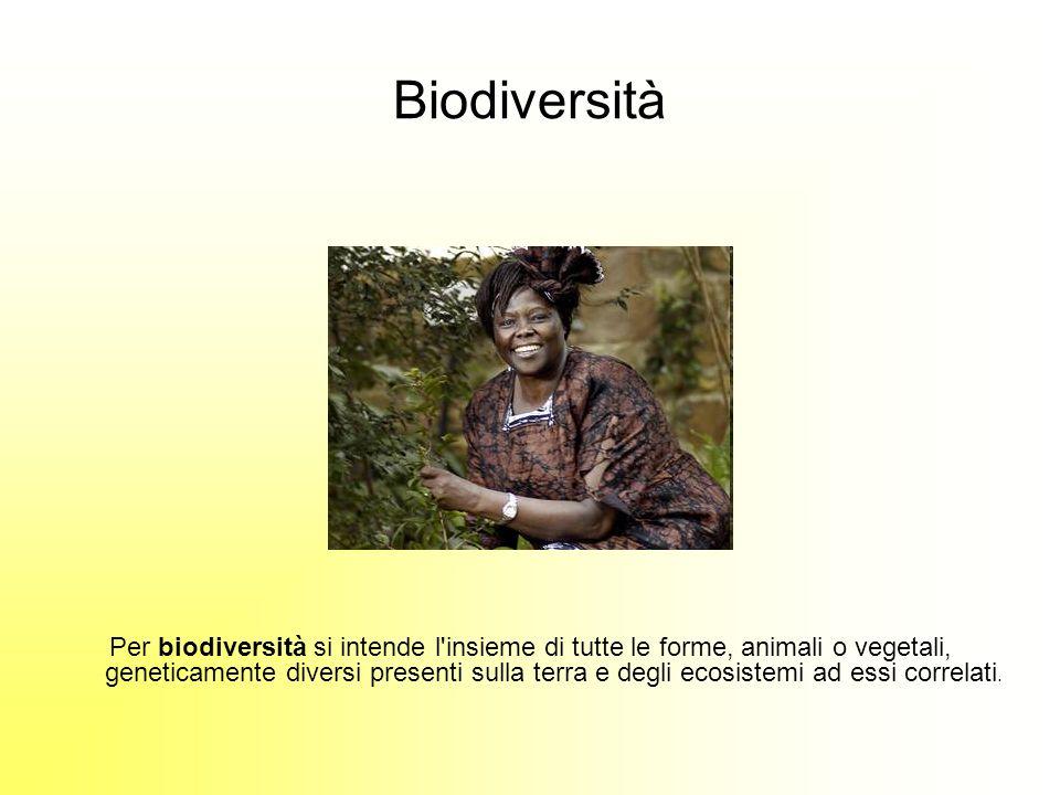 Biodiversità Per biodiversità si intende l insieme di tutte le forme, animali o vegetali, geneticamente diversi presenti sulla terra e degli ecosistemi ad essi correlati.