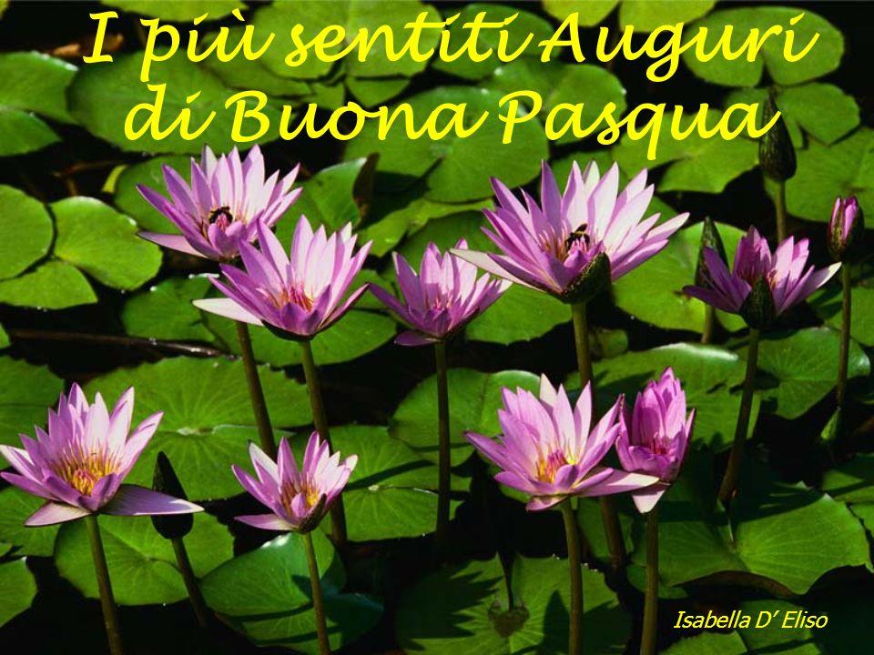 I più sentiti Auguri di Buona Pasqua Isabella D Eliso