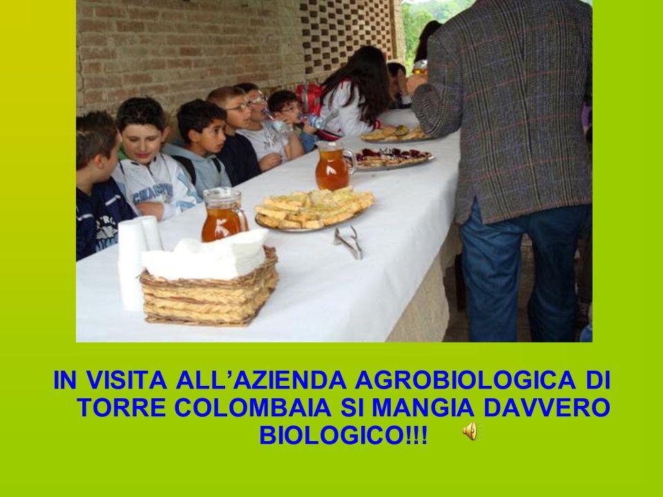 IN VISITA ALLAZIENDA AGROBIOLOGICA DI TORRE COLOMBAIA SI MANGIA DAVVERO BIOLOGICO!!!