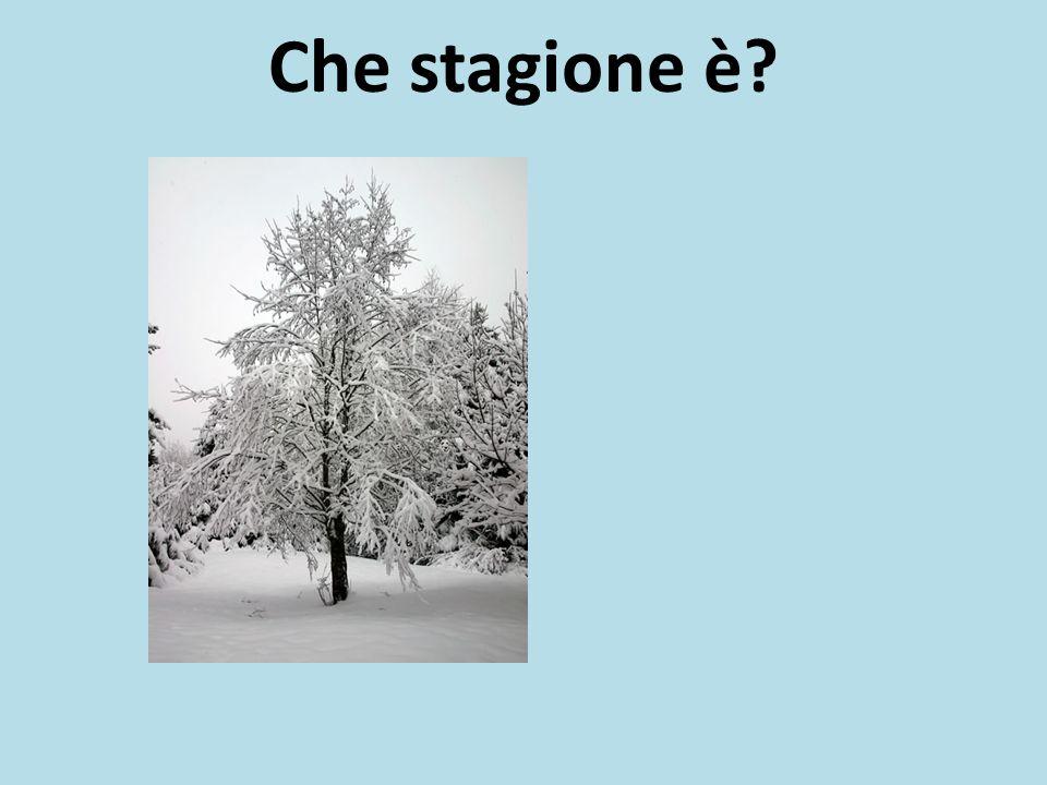 Che stagione è?
