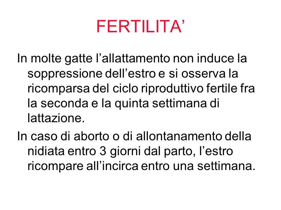 FERTILITA In molte gatte lallattamento non induce la soppressione dellestro e si osserva la ricomparsa del ciclo riproduttivo fertile fra la seconda e