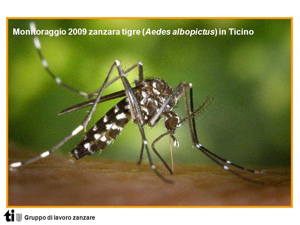 Gruppo di lavoro zanzare Caratteristiche peculiari della zanzara tigre puntura ripetuta puntura diurna (serale) la puntura può dare allergie deposizione in piccole quantità dacqua (max.